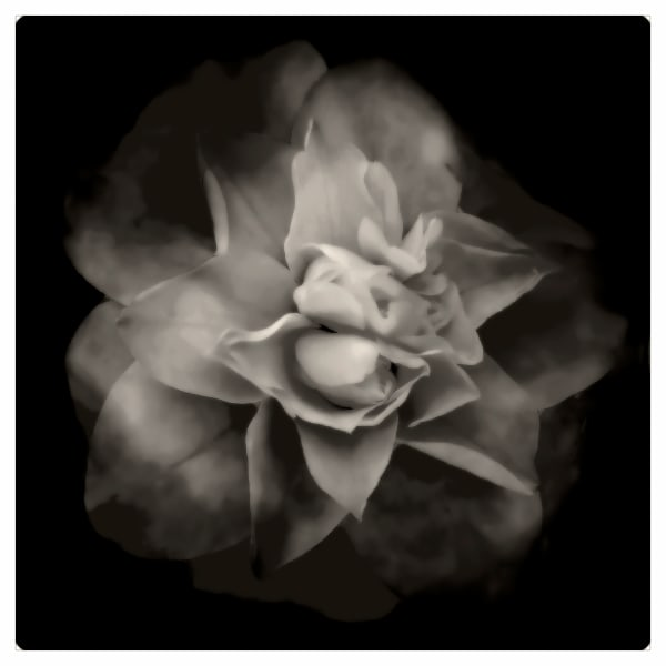 Personal Photographs for Public Spaces -- black and white flower.