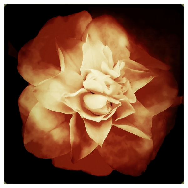Personal Photographs for Public Spaces.  Absolutely gorgeous photograph of flower.
