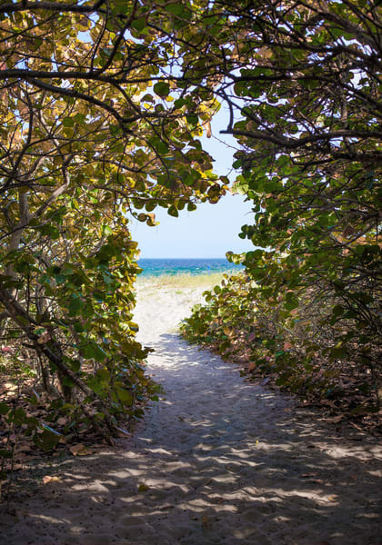 If You Love Trees - color | Path to the Sea, Delray Beach - color. This beautiful tree lined pathway leads to the ocean at Delray Beach, Florida. Fine art color photograph by David Zlotky.