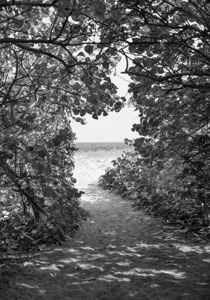 If You Love Trees Collection - bw | Path to the Sea, Delray Beach - bw. Beautiful pathway to the beach. Fine art black and white photograph by David Zlotky.
