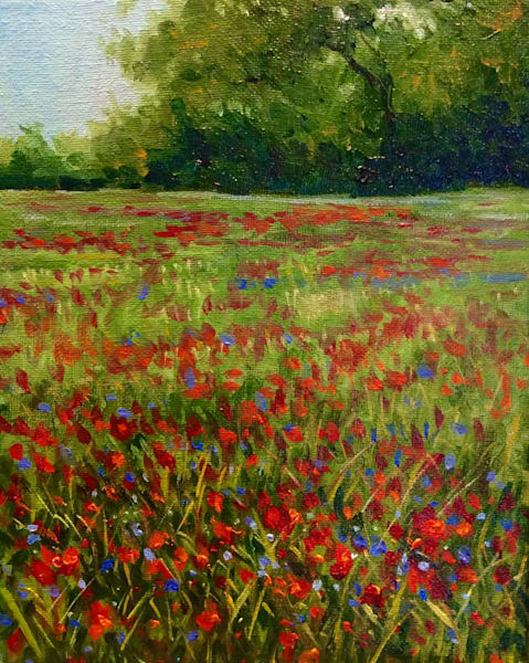 Field of Wild Poppies Original Plein Air Oil Painting