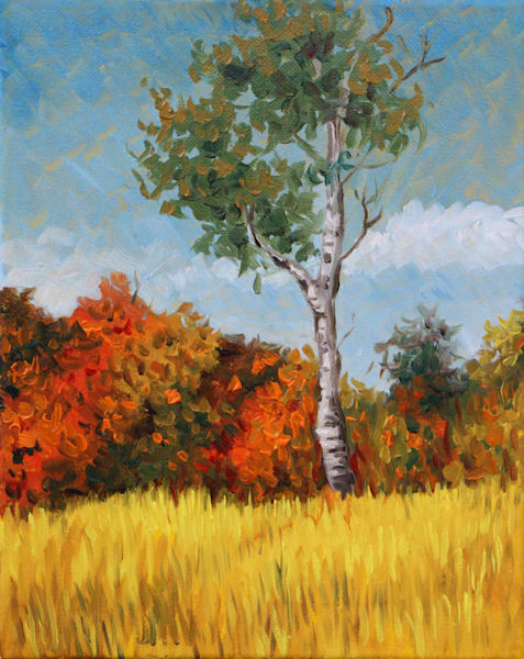 Autumn birch fine art print by Hilary J. England
