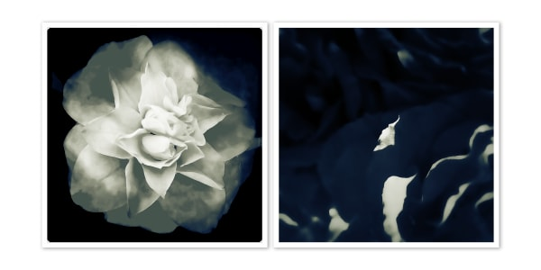 Two Flowers, No.3 in black and white photograph by Daniel Sussman Visuals