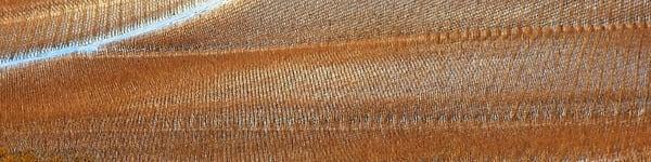 Winter Viineyard Texture