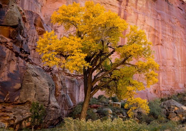 Capital Reef Cottonwood
