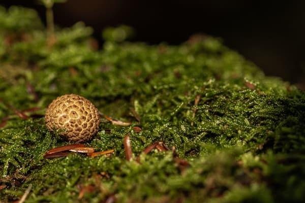 The Mushroom Chronicles 61