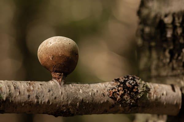 The Mushroom Chronicles43