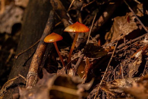 The Mushroom Chronicles42