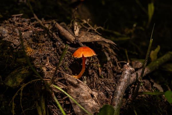 The Mushroom Chronicles 4