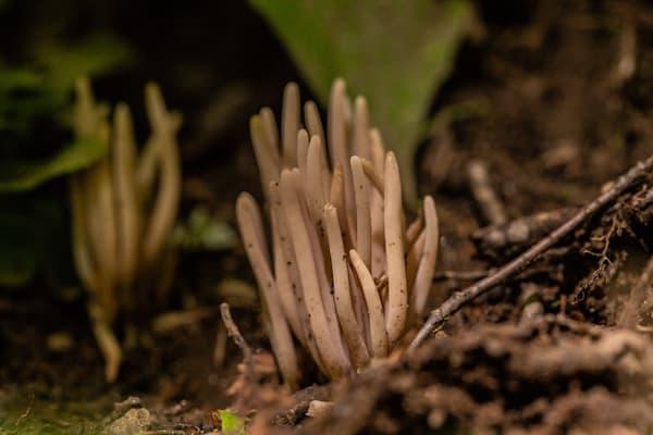 The Mushroom Chronicles 22