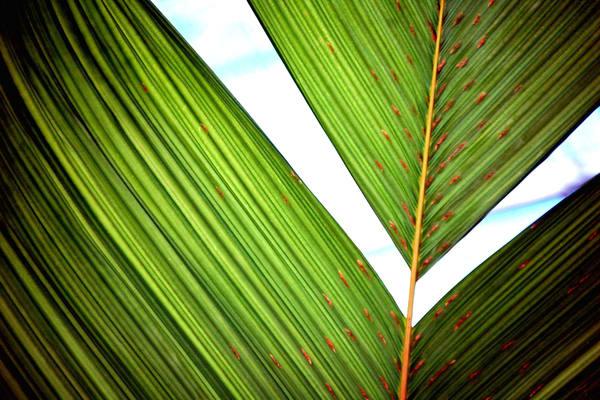 Leaf Detail 150