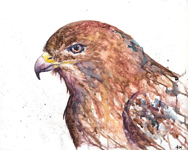 11x14 Red Tail Hawk On Paper Art   HFA print gallery