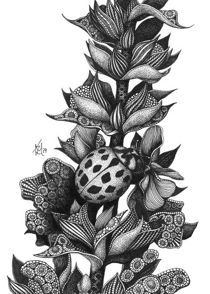 Camouflage (Ladybug)