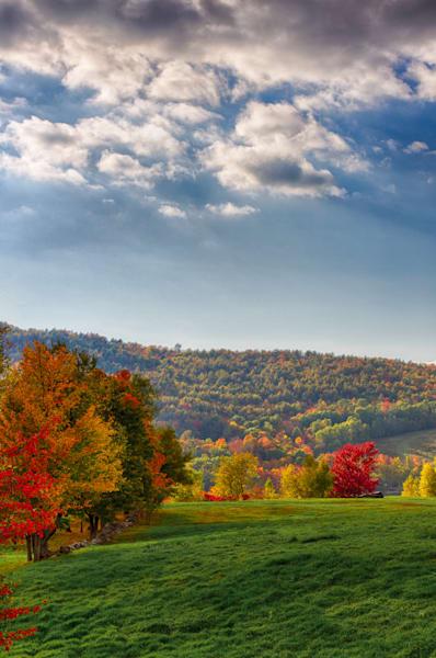 Brush Strokes of Fall