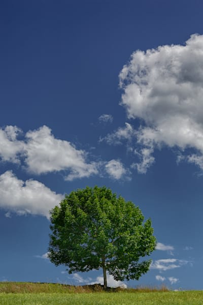 Lone Tree Hill Photography Art | Nathan Larson Photography