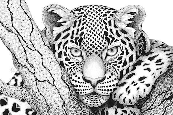 Gotcha! (Leopard)