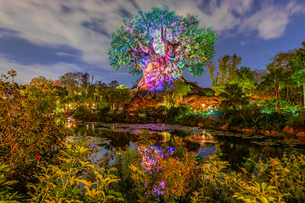 Animal Kingdom Nights - Disney World Wall Art | William Drew Photography