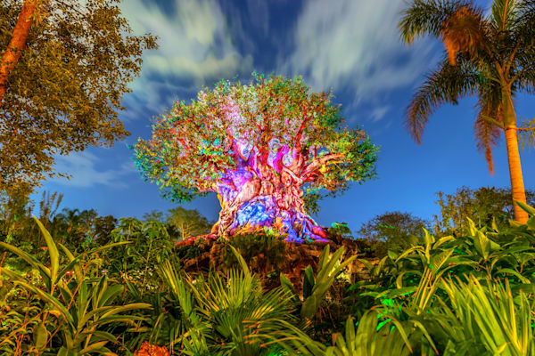 Nighttime at Animal Kingdom - Disney World Wall Art | William Drew Photography