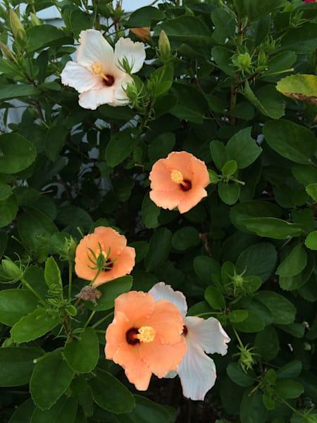 flower field3