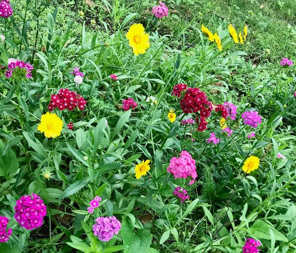 flower field4