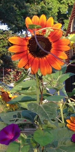 orange flower power1