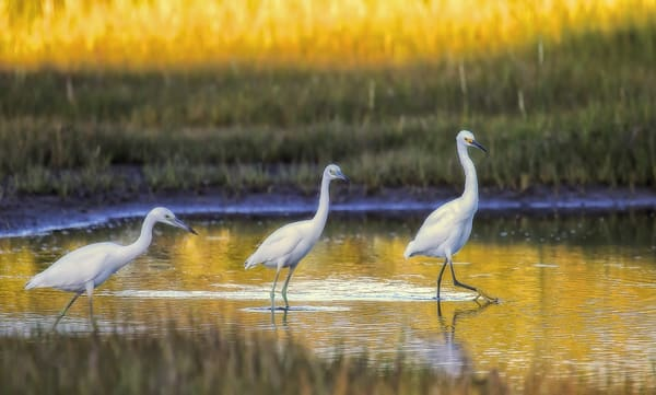 Felix Neck Egrets Art | Michael Blanchard Inspirational Photography - Crossroads Gallery