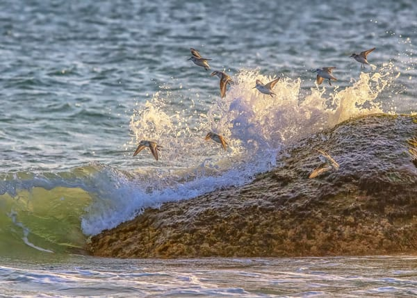 Sanderling Rock And Waves Art | Michael Blanchard Inspirational Photography - Crossroads Gallery