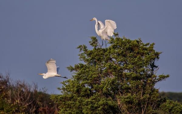 South Beach Egrets Art | Michael Blanchard Inspirational Photography - Crossroads Gallery