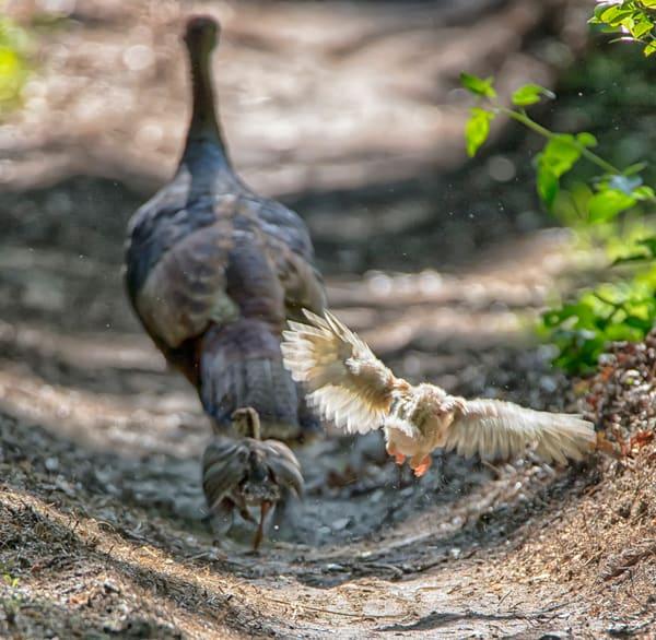 Newborn Turkey Test Flight Art | Michael Blanchard Inspirational Photography - Crossroads Gallery