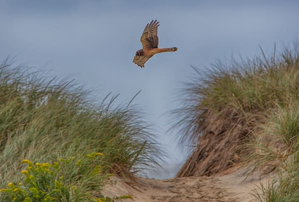 South Beach Red Tailed Hawk Path Art | Michael Blanchard Inspirational Photography - Crossroads Gallery