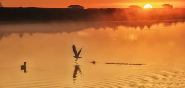 Trapps Pond Seagull Sunrise Art | Michael Blanchard Inspirational Photography - Crossroads Gallery