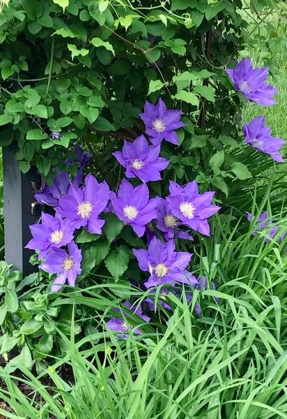 purple flower power6