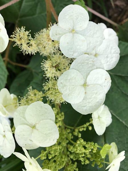 white flower power3