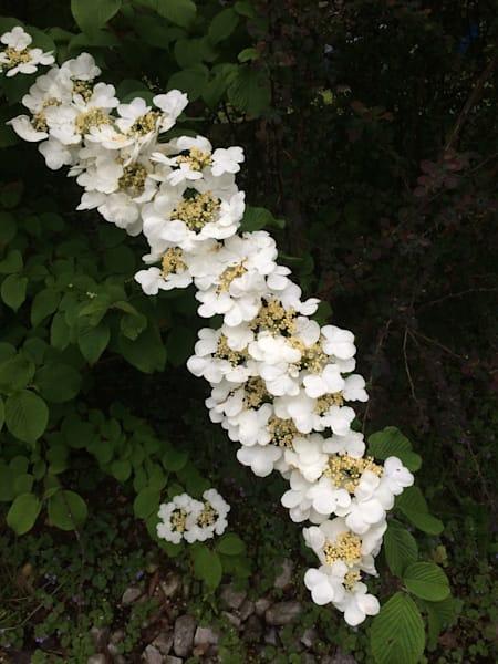 white flower power4