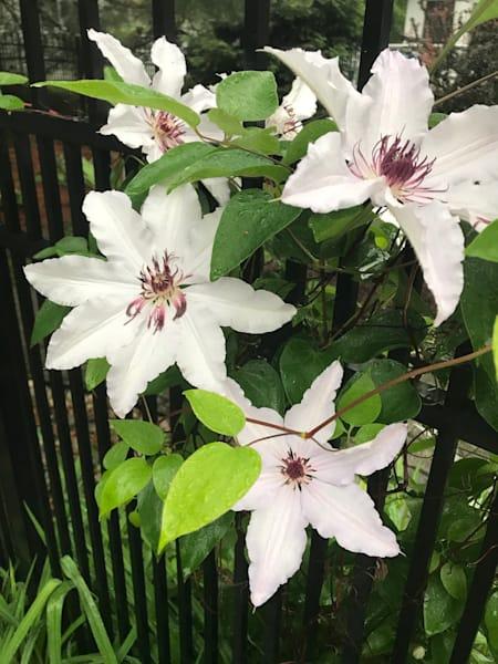 white flower power7
