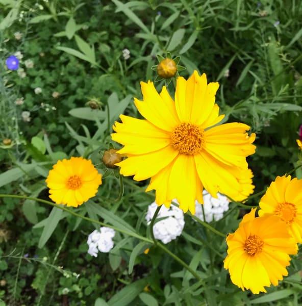 yellow flower power5