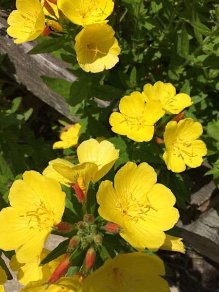 yellow flower power6