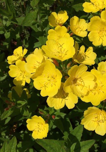 yellow flower power7