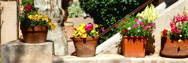 Sedona Plants