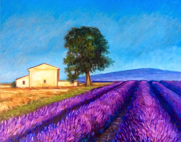 Lavender fields in France Fine Art Print by Hilary J. England