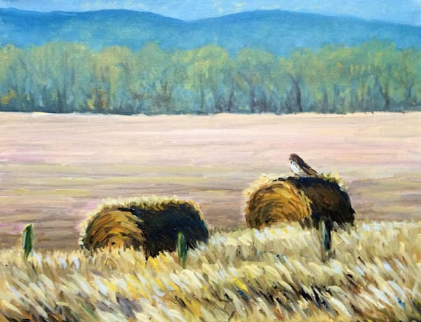 Hawk on a hay bale Fine Art Open Edition Print
