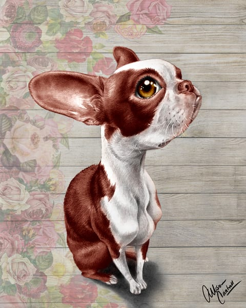 Penny in Color - fine art Boston Terrier print by Allison Cantrell