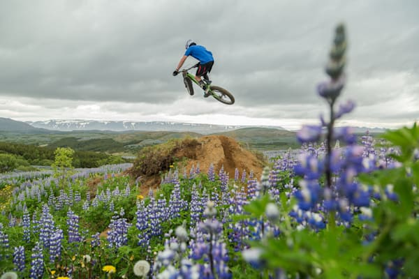 Floating Above The Lupine Photography Art | David N . Braun Photography