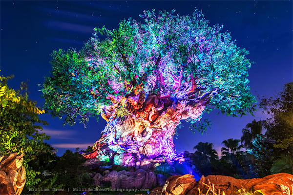 Tree of Life Awakenings - Disney Wall Murals | William Drew