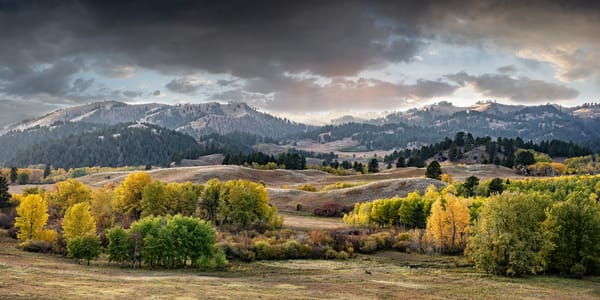 Whitetail Meadow Photography Art | Craig Edwards Fine Art Images