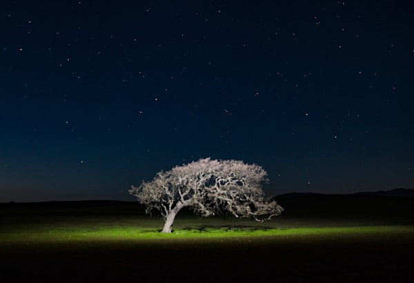 Night sky & oak