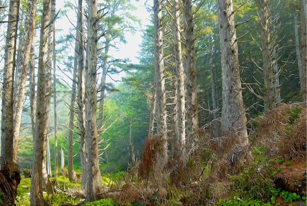 Northwest Image | Marius Hibbard - Trees 06
