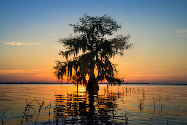 7634 Cypress Sunrise  Blue Cypress Lake Art | Cunningham Gallery