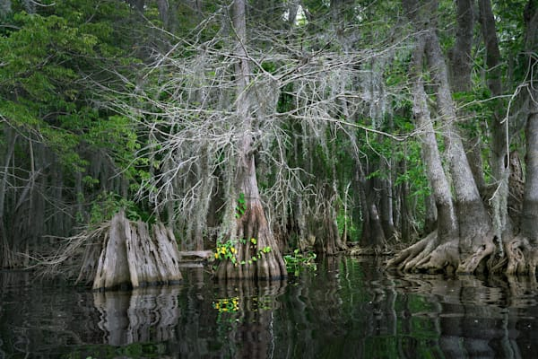 7551 Blue Cypress Lake Art | Cunningham Gallery