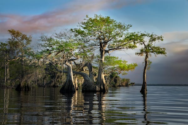 7704 Blue Cypress Lake Art | Cunningham Gallery
